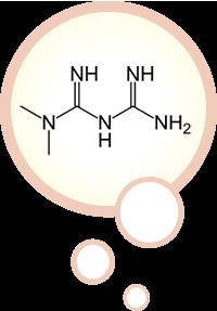 Metformin diagram