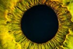 The eyes have it - top tips for healthy eyes